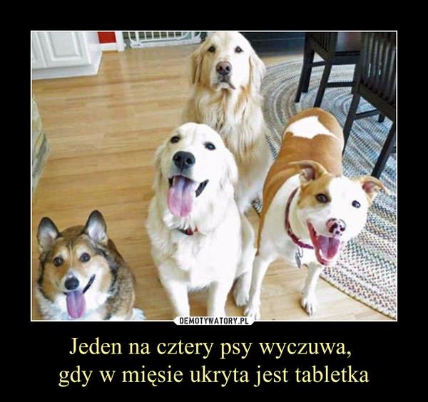 Jeden na cztery psy wyczuwa, gdy w mięsie ukryta jest tabletka –