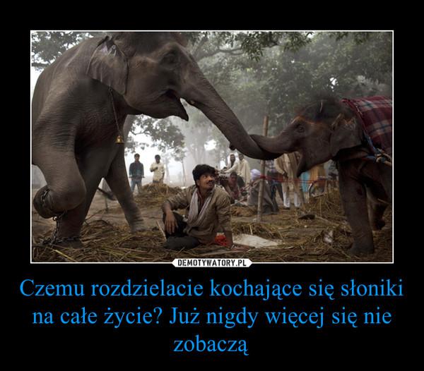 Czemu rozdzielacie kochające się słoniki na całe życie? Już nigdy więcej się nie zobaczą –