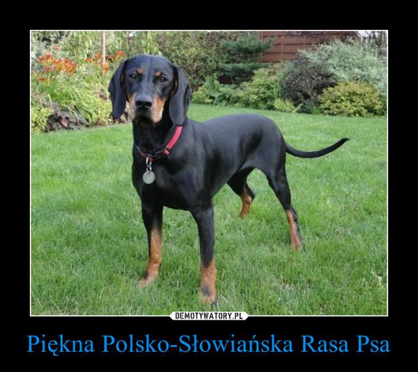 Piękna Polsko-Słowiańska Rasa Psa –