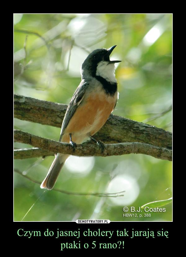 Czym do jasnej cholery tak jarają się ptaki o 5 rano?! –