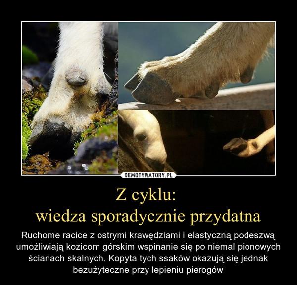 Z cyklu: wiedza sporadycznie przydatna – Ruchome racice z ostrymi krawędziami i elastyczną podeszwą umożliwiają kozicom górskim wspinanie się po niemal pionowych ścianach skalnych. Kopyta tych ssaków okazują się jednak bezużyteczne przy lepieniu pierogów