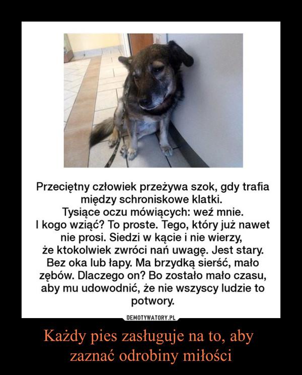 Każdy pies zasługuje na to, aby zaznać odrobiny miłości –