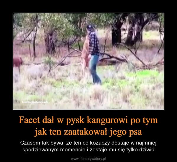 Facet dał w pysk kangurowi po tymjak ten zaatakował jego psa – Czasem tak bywa, że ten co kozaczy dostaje w najmniej spodziewanym momencie i zostaje mu się tylko dziwić