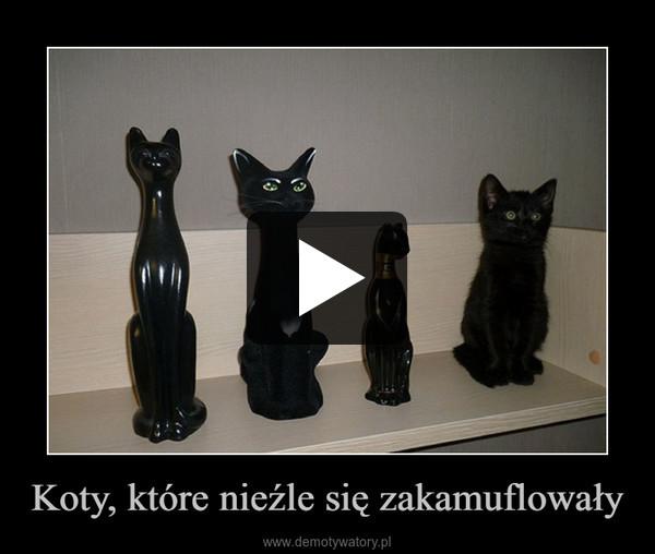Koty, które nieźle się zakamuflowały –