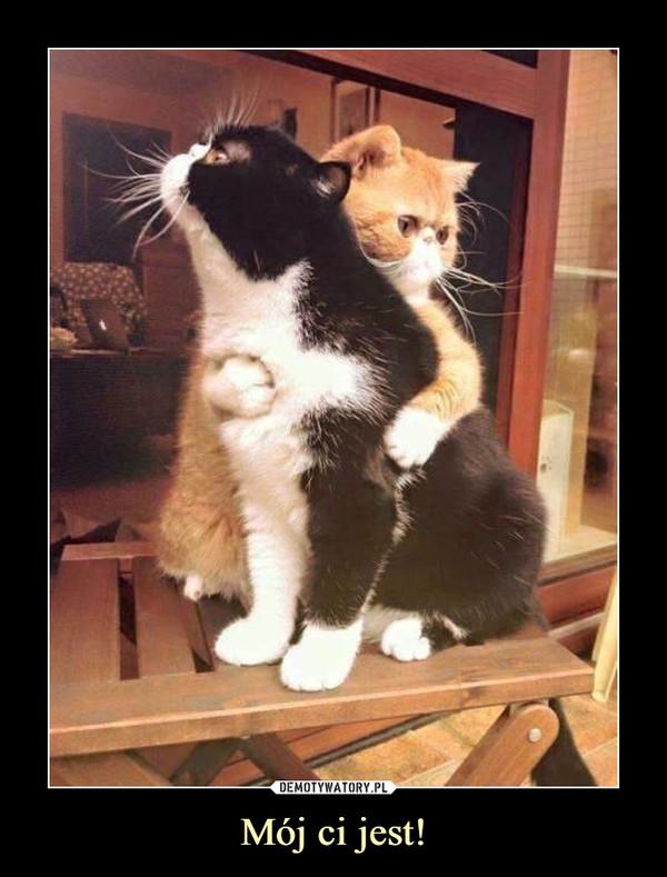 Mój ci jest! –