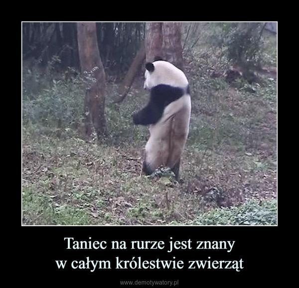 Taniec na rurze jest znanyw całym królestwie zwierząt –