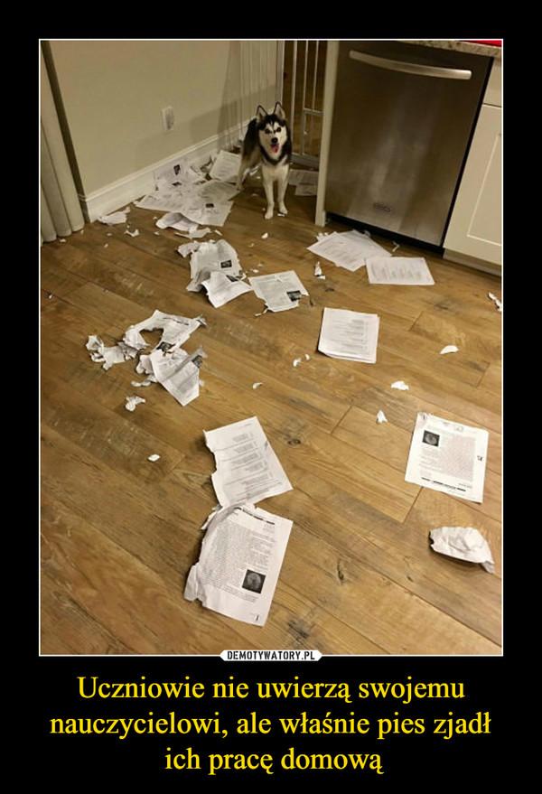 Uczniowie nie uwierzą swojemu nauczycielowi, ale właśnie pies zjadł ich pracę domową –