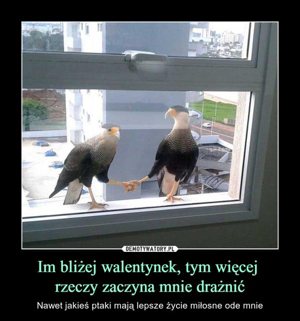Im bliżej walentynek, tym więcej rzeczy zaczyna mnie drażnić – Nawet jakieś ptaki mają lepsze życie miłosne ode mnie