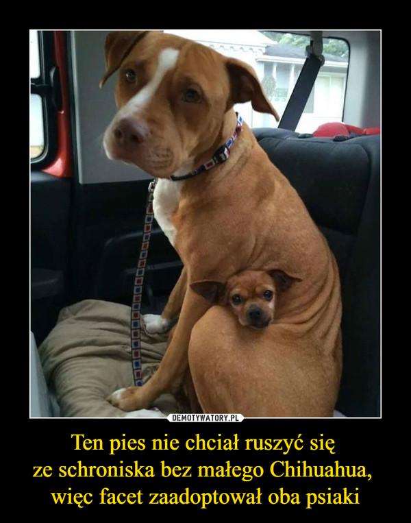 Ten pies nie chciał ruszyć się ze schroniska bez małego Chihuahua, więc facet zaadoptował oba psiaki –
