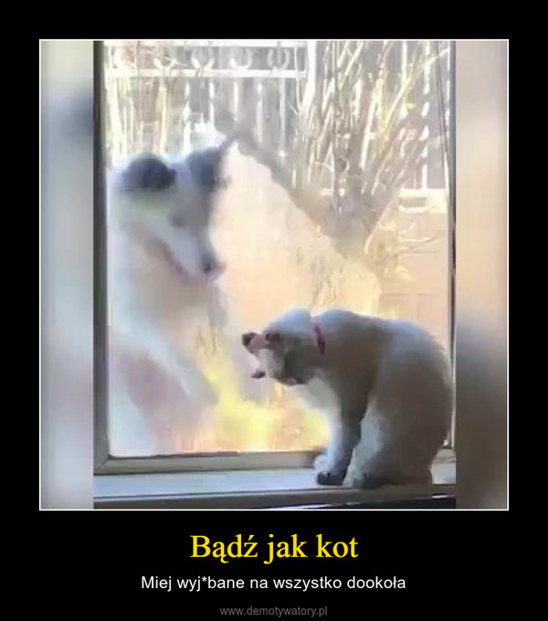 Bądź jak kot – Miej wyj*bane na wszystko dookoła