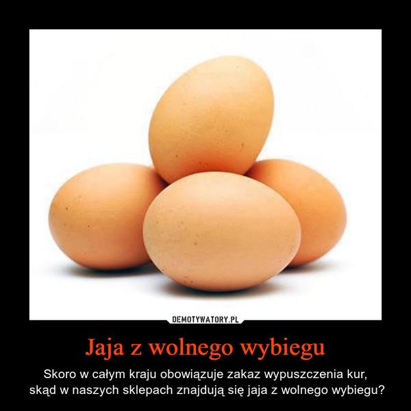 Jaja z wolnego wybiegu – Skoro w całym kraju obowiązuje zakaz wypuszczenia kur, skąd w naszych sklepach znajdują się jaja z wolnego wybiegu?