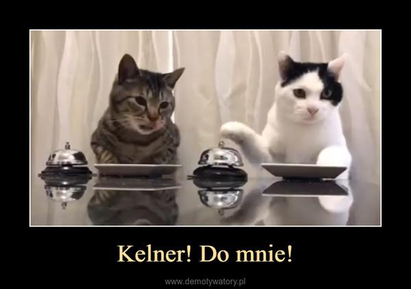 Kelner! Do mnie! –