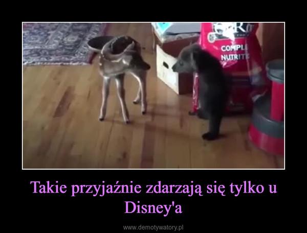 Takie przyjaźnie zdarzają się tylko u Disney'a –