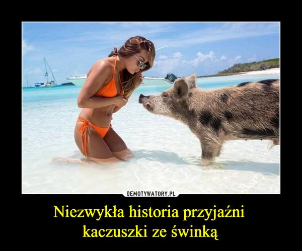 Niezwykła historia przyjaźni kaczuszki ze świnką –