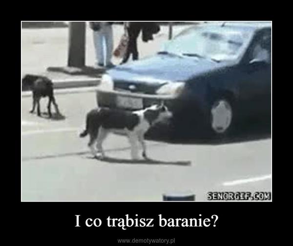 I co trąbisz baranie? –