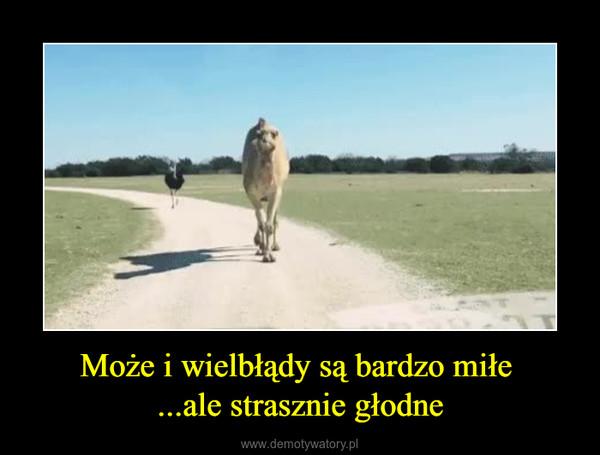 Może i wielbłądy są bardzo miłe ...ale strasznie głodne –