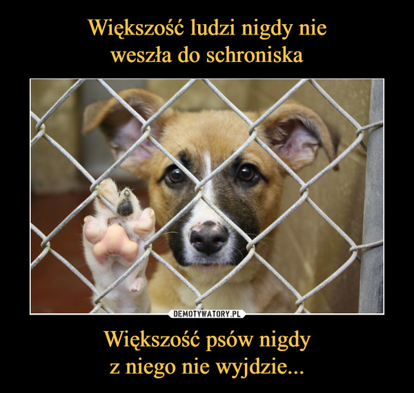 Większość psów nigdyz niego nie wyjdzie... –