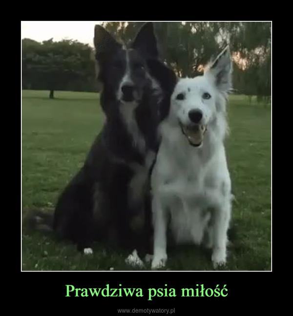 Prawdziwa psia miłość –