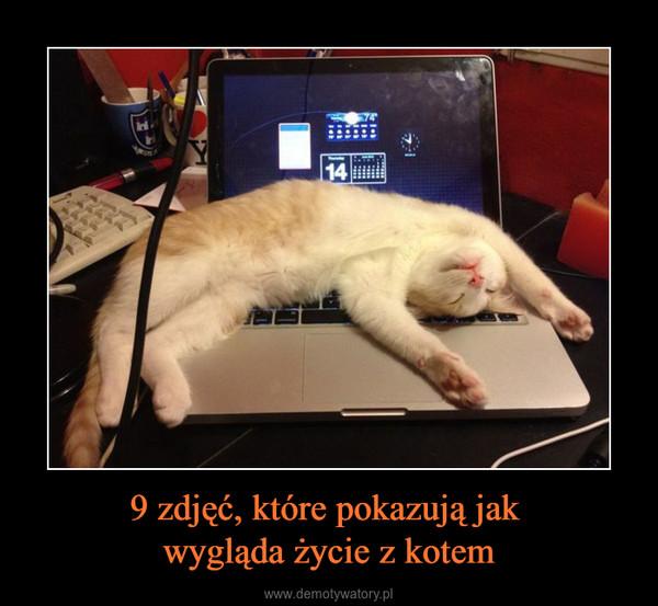 9 zdjęć, które pokazują jak wygląda życie z kotem –