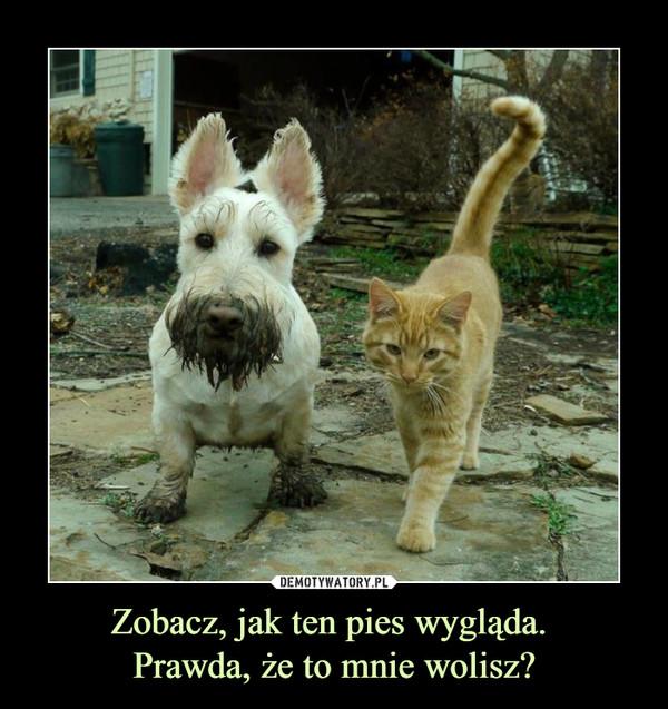 Zobacz, jak ten pies wygląda. Prawda, że to mnie wolisz? –