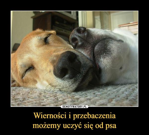 Wierności i przebaczeniamożemy uczyć się od psa –
