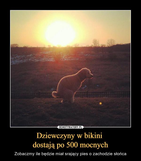 Dziewczyny w bikini dostają po 500 mocnych – Zobaczmy ile będzie miał srający pies o zachodzie słońca
