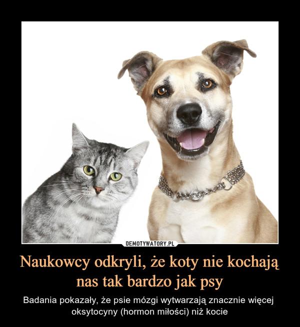Naukowcy odkryli, że koty nie kochają nas tak bardzo jak psy – Badania pokazały, że psie mózgi wytwarzają znacznie więcej oksytocyny (hormon miłości) niż kocie
