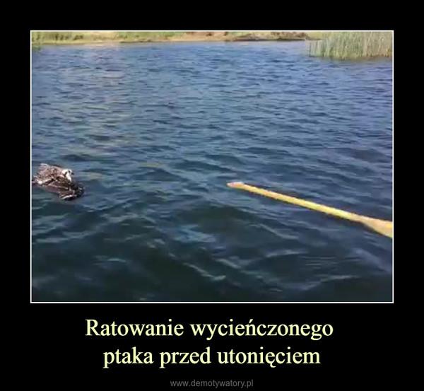 Ratowanie wycieńczonego ptaka przed utonięciem –