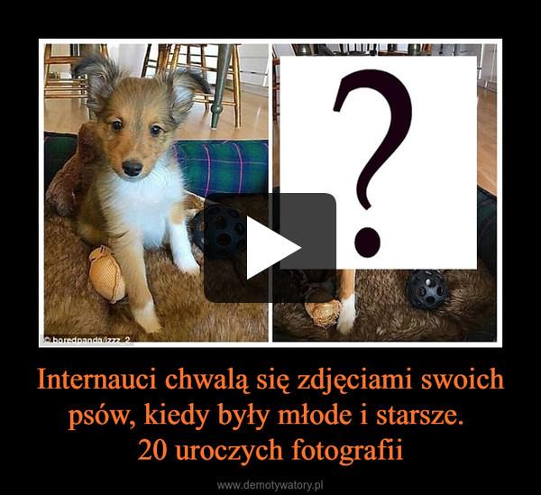 Internauci chwalą się zdjęciami swoich psów, kiedy były młode i starsze. 20 uroczych fotografii –