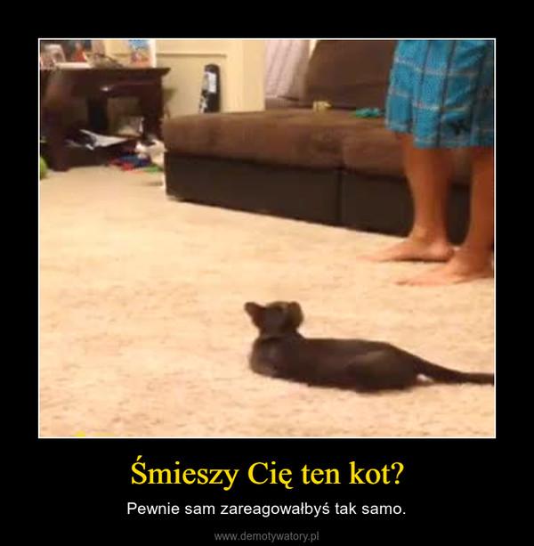 Śmieszy Cię ten kot? – Pewnie sam zareagowałbyś tak samo.