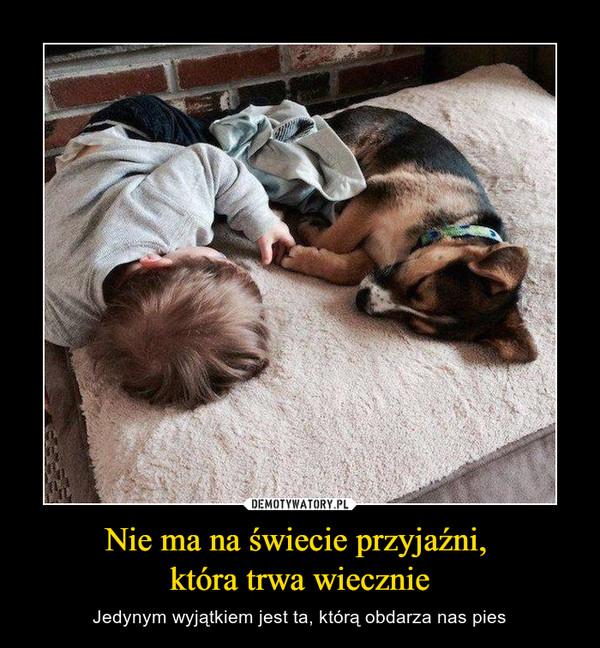 Nie ma na świecie przyjaźni, która trwa wiecznie – Jedynym wyjątkiem jest ta, którą obdarza nas pies