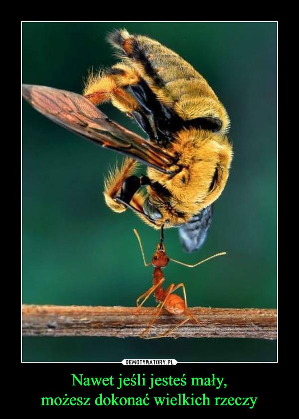 Nawet jeśli jesteś mały,możesz dokonać wielkich rzeczy –