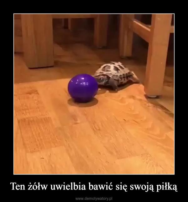 Ten żółw uwielbia bawić się swoją piłką –