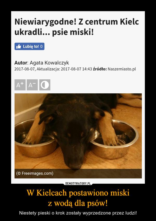 W Kielcach postawiono miskiz wodą dla psów! – Niestety pieski o krok zostały wyprzedzone przez ludzi!