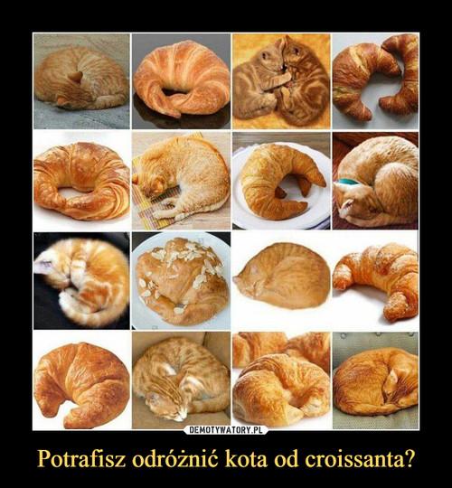 Potrafisz odróżnić kota od croissanta?