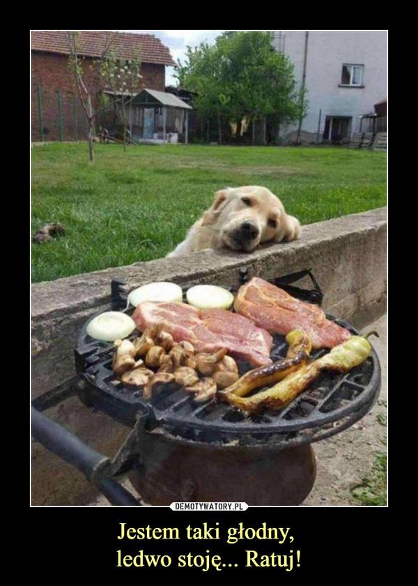 Jestem taki głodny, ledwo stoję... Ratuj! –