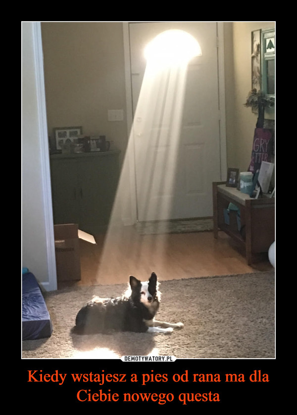 Kiedy wstajesz a pies od rana ma dla Ciebie nowego questa –