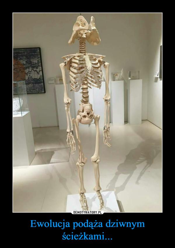 Ewolucja podąża dziwnym ścieżkami... –