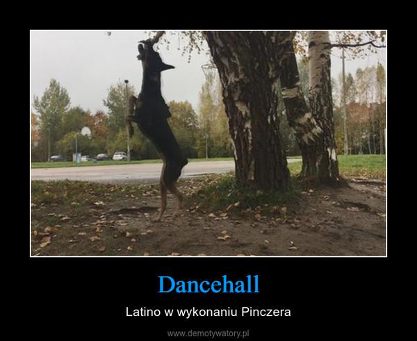Dancehall – Latino w wykonaniu Pinczera