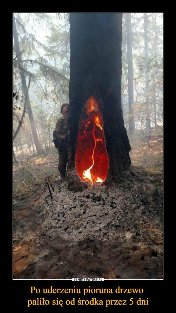 Po uderzeniu pioruna drzewo paliło się od środka przez 5 dni –