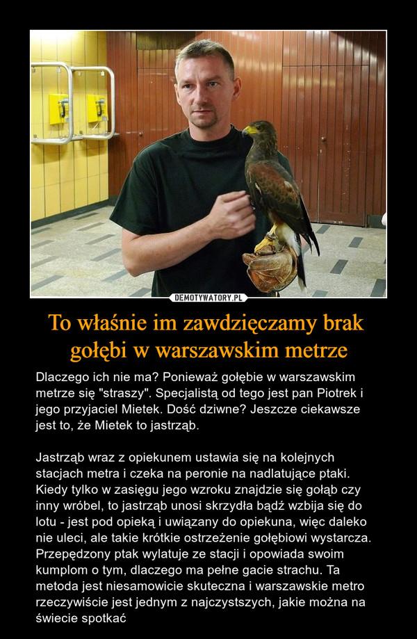 """To właśnie im zawdzięczamy brak gołębi w warszawskim metrze – Dlaczego ich nie ma? Ponieważ gołębie w warszawskim metrze się """"straszy"""". Specjalistą od tego jest pan Piotrek i jego przyjaciel Mietek. Dość dziwne? Jeszcze ciekawsze jest to, że Mietek to jastrząb.Jastrząb wraz z opiekunem ustawia się na kolejnych stacjach metra i czeka na peronie na nadlatujące ptaki. Kiedy tylko w zasięgu jego wzroku znajdzie się gołąb czy inny wróbel, to jastrząb unosi skrzydła bądź wzbija się do lotu - jest pod opieką i uwiązany do opiekuna, więc daleko nie uleci, ale takie krótkie ostrzeżenie gołębiowi wystarcza. Przepędzony ptak wylatuje ze stacji i opowiada swoim kumplom o tym, dlaczego ma pełne gacie strachu. Ta metoda jest niesamowicie skuteczna i warszawskie metro rzeczywiście jest jednym z najczystszych, jakie można na świecie spotkać"""