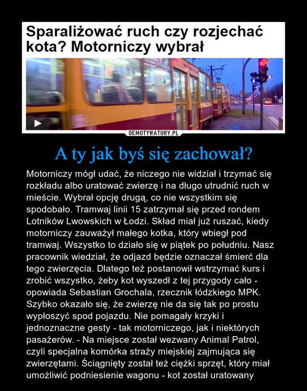 A ty jak byś się zachował? – Motorniczy mógł udać, że niczego nie widział i trzymać się rozkładu albo uratować zwierzę i na długo utrudnić ruch w mieście. Wybrał opcję drugą, co nie wszystkim się spodobało. Tramwaj linii 15 zatrzymał się przed rondem Lotników Lwowskich w Łodzi. Skład miał już ruszać, kiedy motorniczy zauważył małego kotka, który wbiegł pod tramwaj. Wszystko to działo się w piątek po południu. Nasz pracownik wiedział, że odjazd będzie oznaczał śmierć dla tego zwierzęcia. Dlatego też postanowił wstrzymać kurs i zrobić wszystko, żeby kot wyszedł z tej przygody cało - opowiada Sebastian Grochala, rzecznik łódzkiego MPK. Szybko okazało się, że zwierzę nie da się tak po prostu wypłoszyć spod pojazdu. Nie pomagały krzyki i jednoznaczne gesty - tak motorniczego, jak i niektórych pasażerów. - Na miejsce został wezwany Animal Patrol, czyli specjalna komórka straży miejskiej zajmująca się zwierzętami. Ściągnięty został też ciężki sprzęt, który miał umożliwić podniesienie wagonu - kot został uratowany Sparaliżować ruch, czy rozjechać kota? Motorniczy wybrał