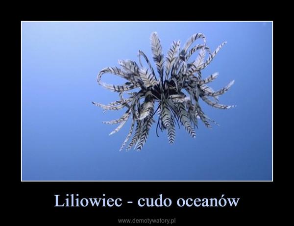 Liliowiec - cudo oceanów –