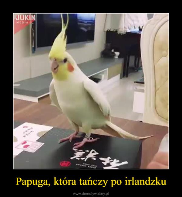 Papuga, która tańczy po irlandzku –