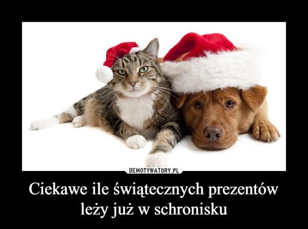 Ciekawe ile świątecznych prezentów leży już w schronisku –