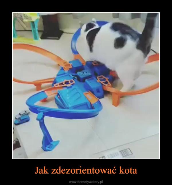 Jak zdezorientować kota –