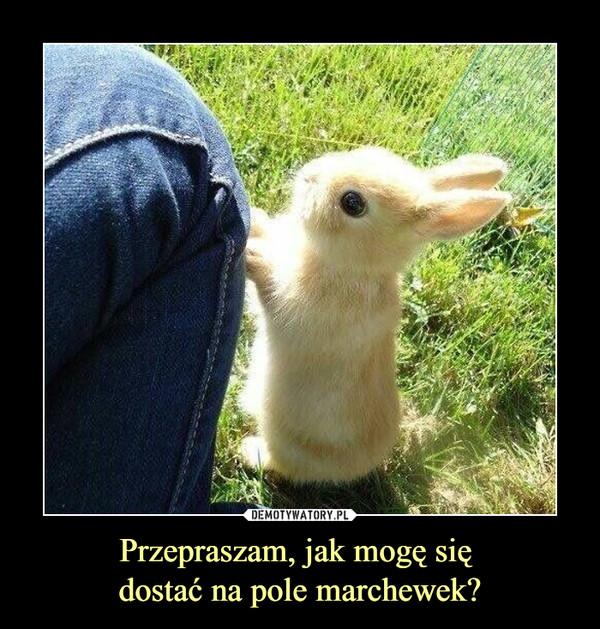 Przepraszam, jak mogę się dostać na pole marchewek? –