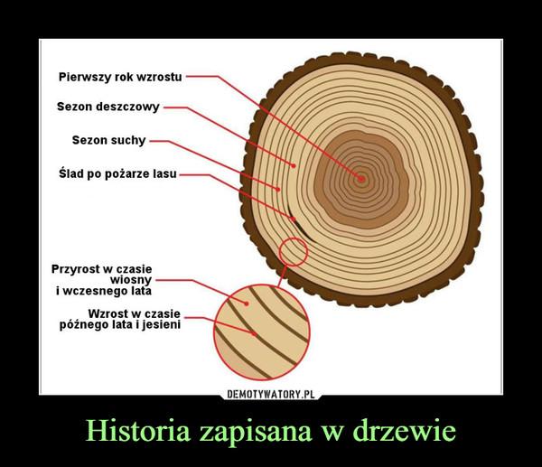 Historia zapisana w drzewie –  Pierwszy rok wzrostuSezon deszczowySezon suchyŚlad po pożarze lasuPrzyrost w czasie wiosny i wczesnego lataWzrost w czasie późnego lata i jesieni
