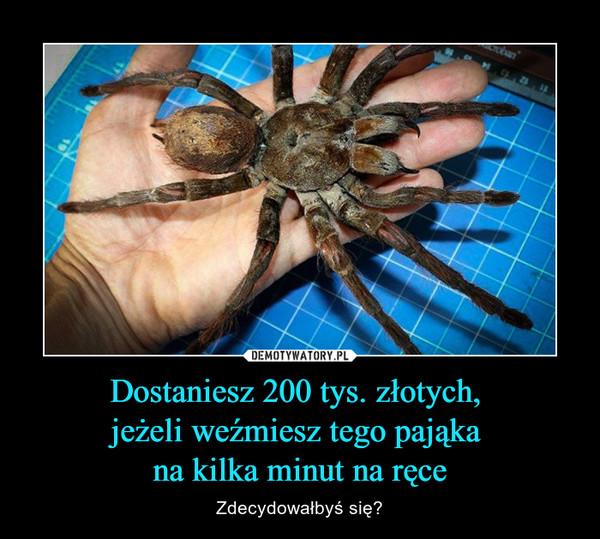 Dostaniesz 200 tys. złotych, jeżeli weźmiesz tego pająka na kilka minut na ręce – Zdecydowałbyś się?