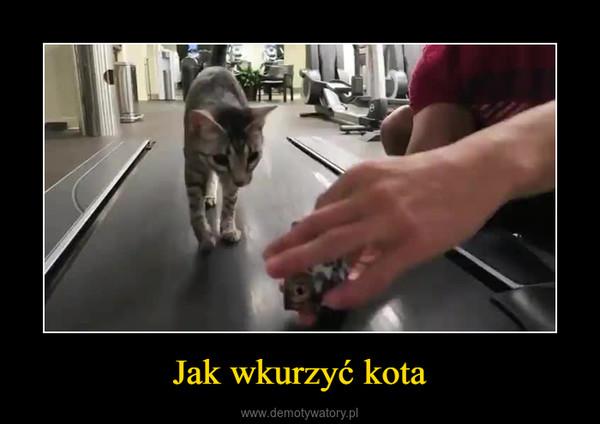 Jak wkurzyć kota –